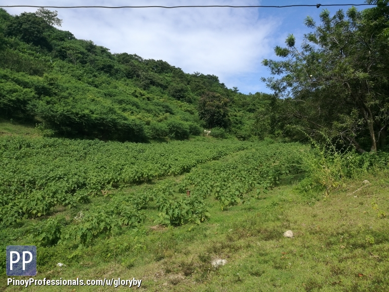 Land for Sale - 18727 vegetable farm in Carlosa Calatagan Batangas at Php 130/sqm