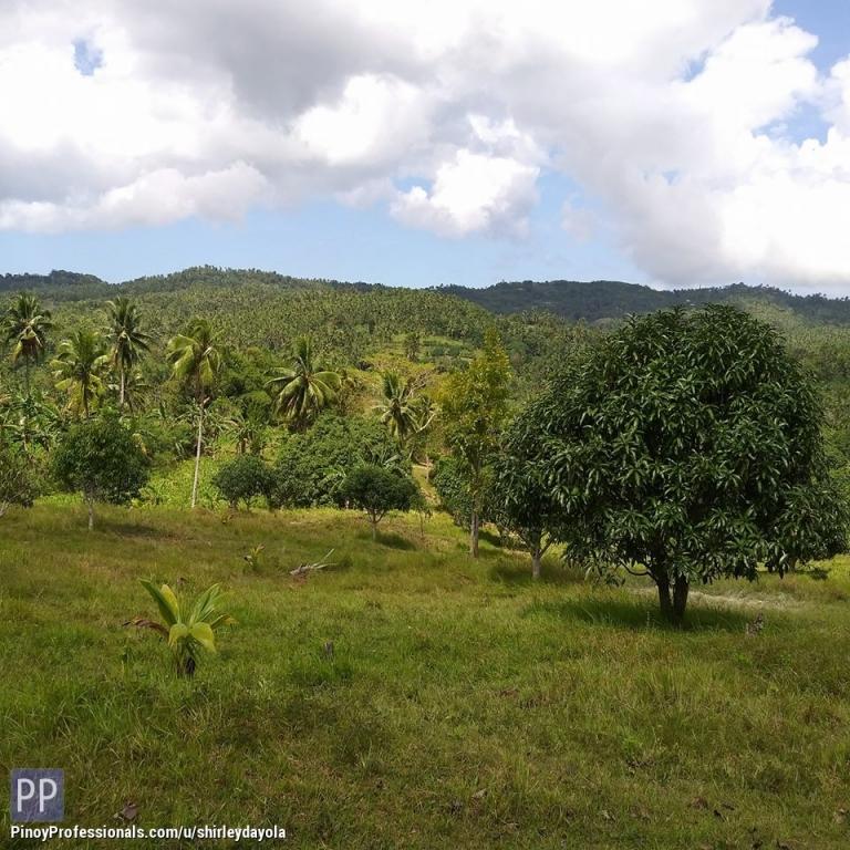 Land for Sale - Farm Lot for sale Balao Barili Cebu