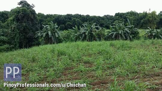 Land for Sale - Farl Lot Silang Cavite