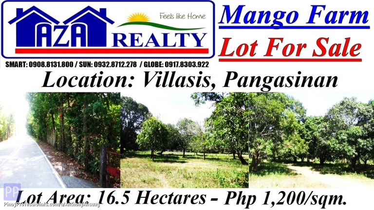 Land for Sale - Php 1,200/sqm. Mango Farm 16.5 Hectares Lot For Sale in Villasis Pangasinan