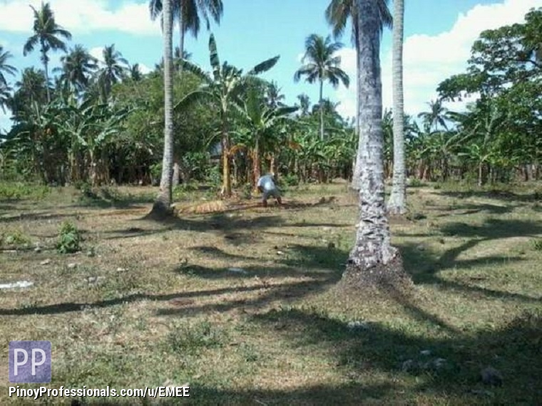 Land for Sale - FOR SALE FARM AND LAND IN PAGSANJAN LAGUNA !