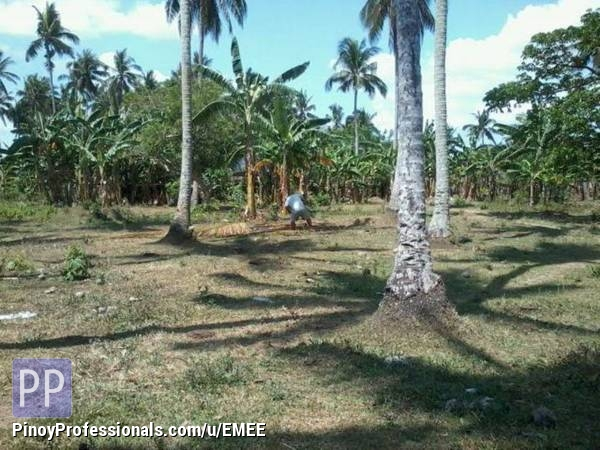 Land for Sale - Land for sale in laguna