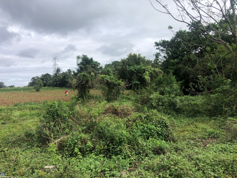 Land for Sale - Farm Lot for Sale in Dasmariñas, Cavite