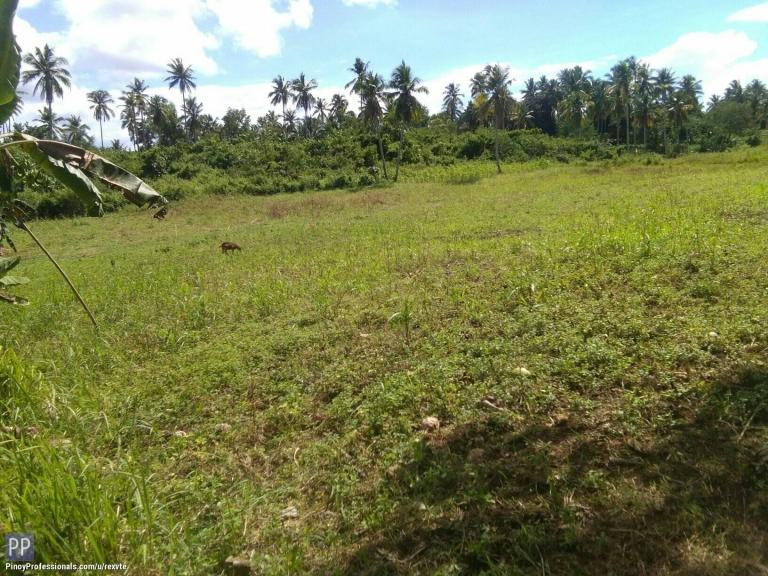 Land for Sale - LOT FOR SALE AT ASTURIAS, CEBU